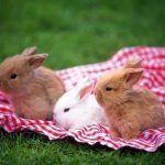 Малыши-крольчата