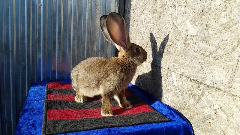 Кролик и его тень