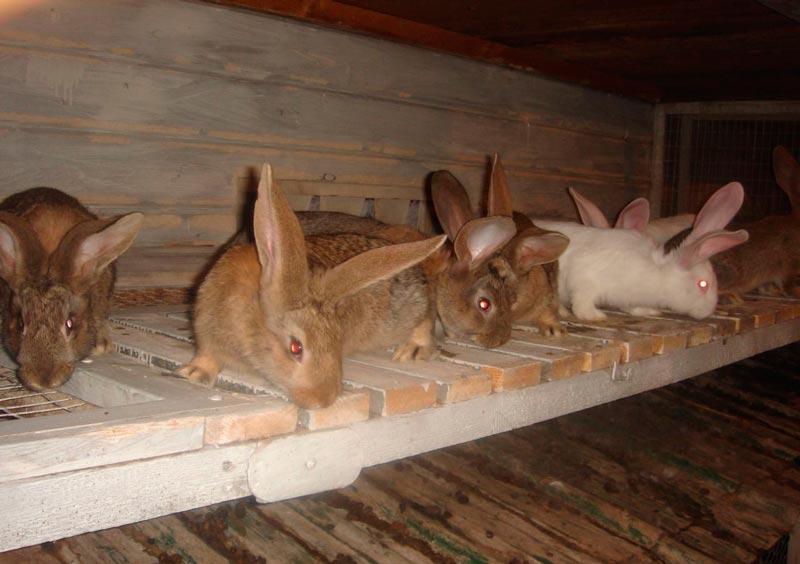 Кролики на полке