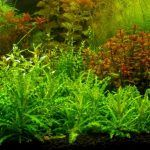 Разные водоросли