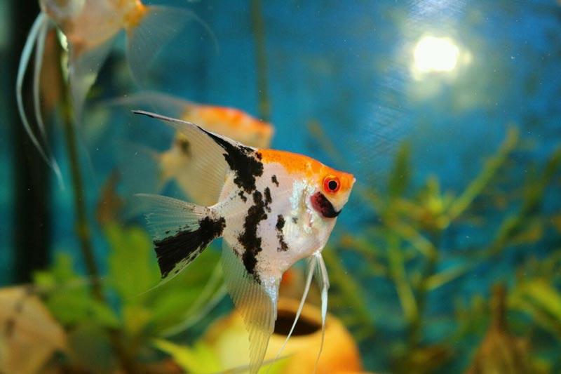 Одинокая рыбка