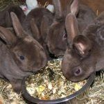 Кролики едят разную пищу