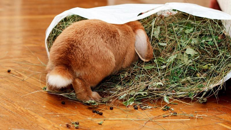 Чем кормить кроликов - правила организации питания кроликов