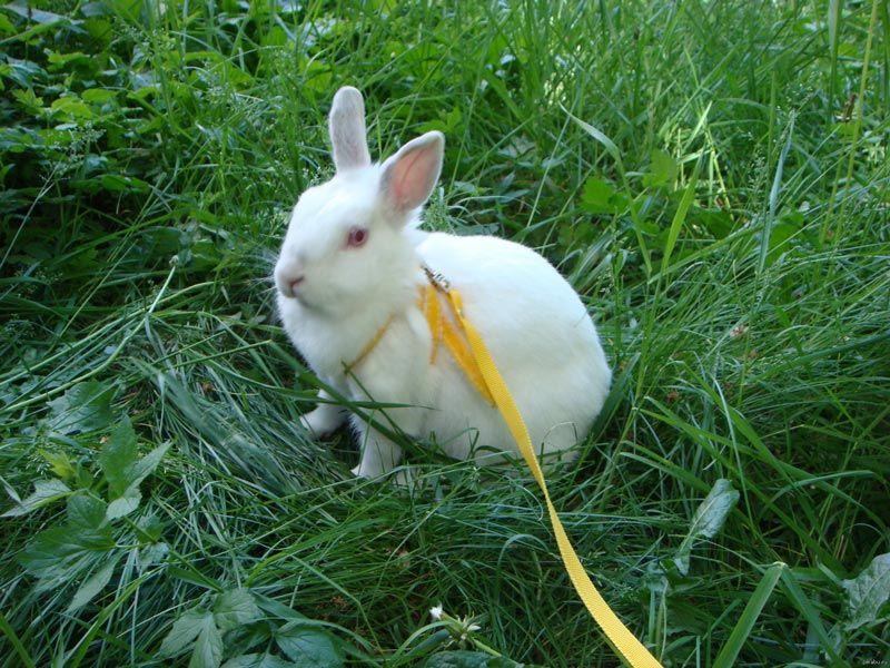Кроль на выгуле