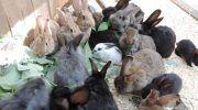 Всё о болезнях кроликов