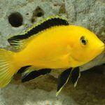 Рыбка у камня