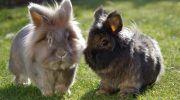 Чем отличаются кролики от зайцев