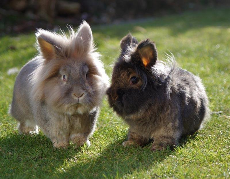 Два крольчонка на травке