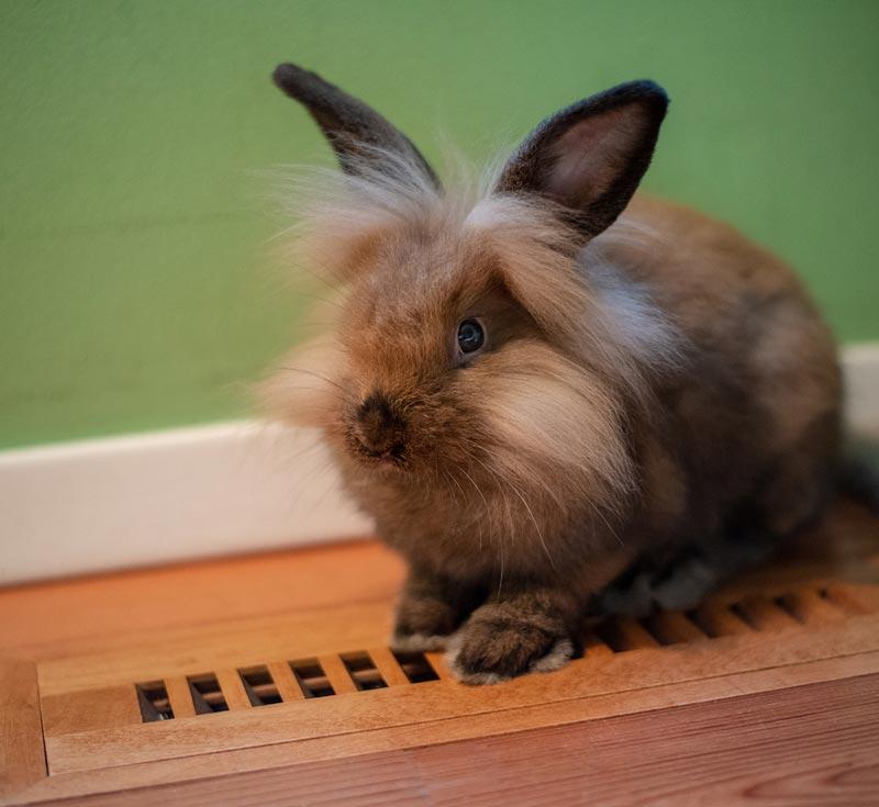 Кроль на полу
