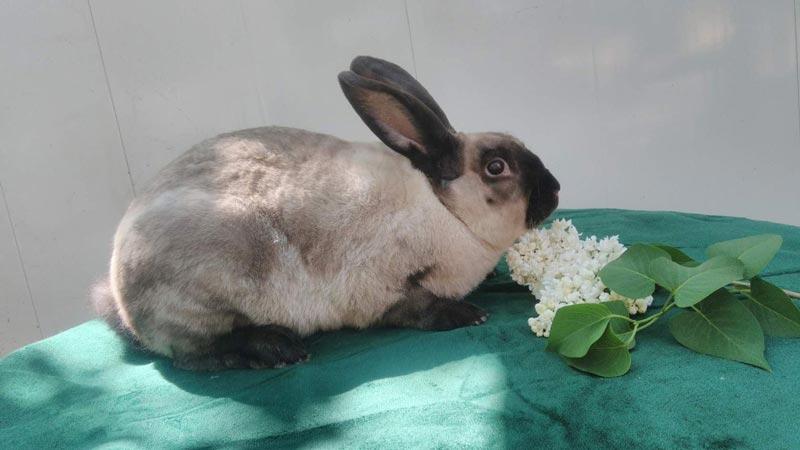 Мардер кролик