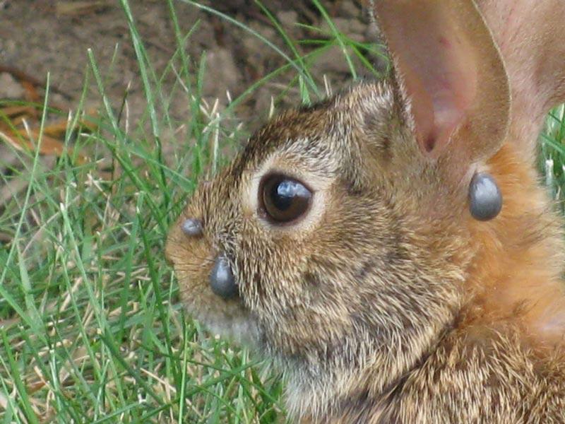Шишки у кроля