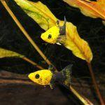 Две маленькие рыбки