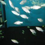 Много мелких рыбок