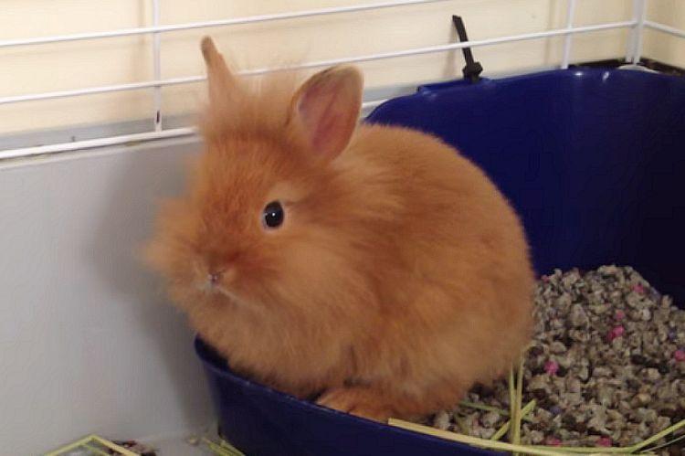 Кролик оранж