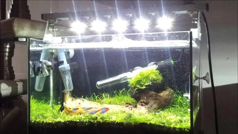 Ярко в аквариуме