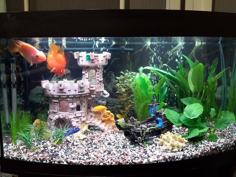 Светлый аквариум с рыбками