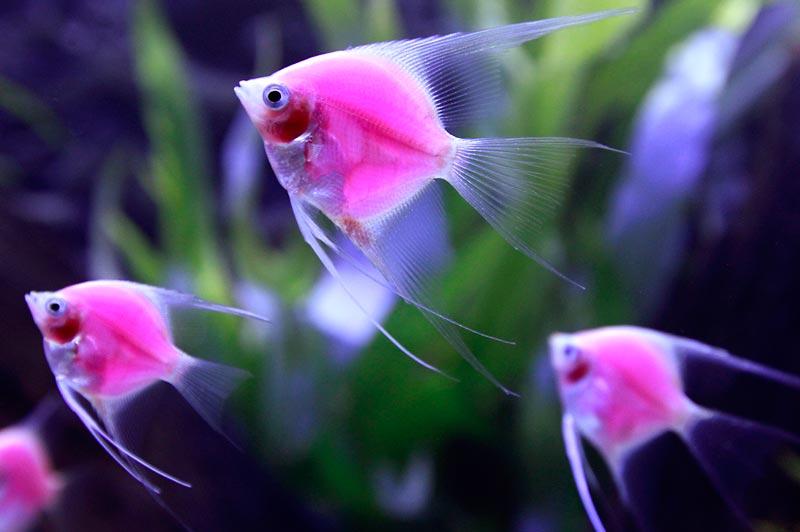 Розовая светящаяся