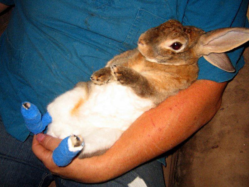 Кроль после ветеринара