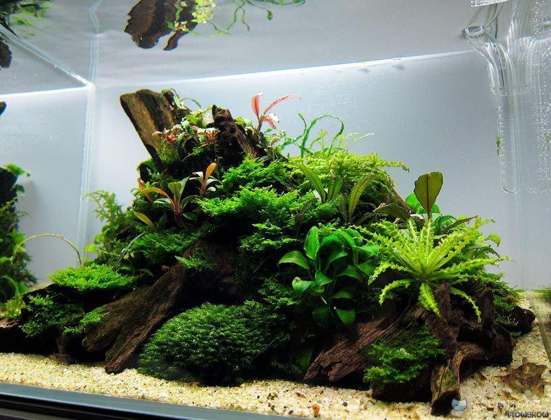 Бурая водоросль в аквариуме фото ощущение