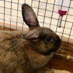 Кролик рядом с поилкой