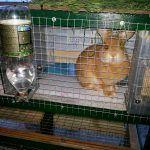Рыжий кроль в хорошей клетке