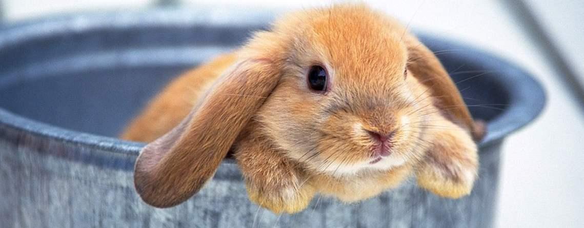 Соболиный кроль