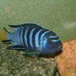 Полосатая рыбка