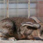 Кроль прижал уши