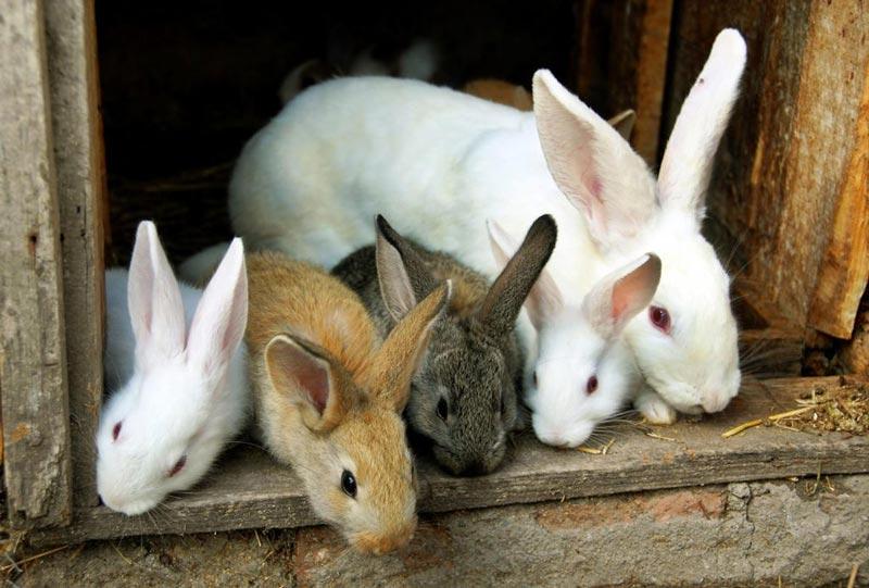 Белая самка и ее дети