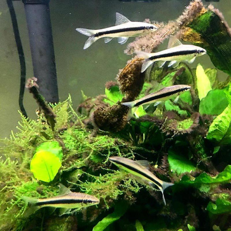 Несколько рыбок САЕ