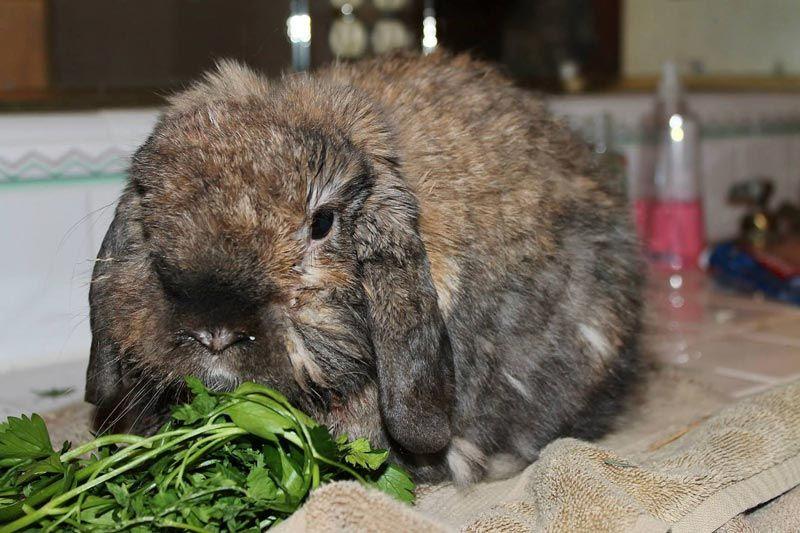 Приболевший кроль