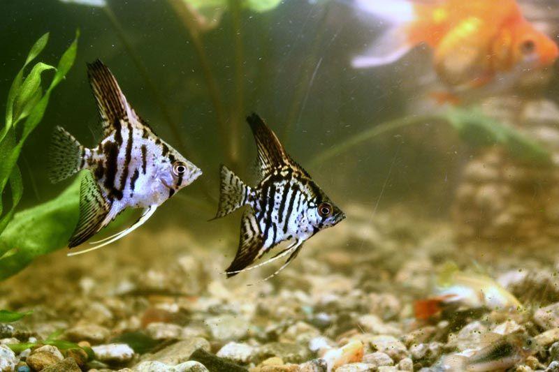 Две одинокие рыбки
