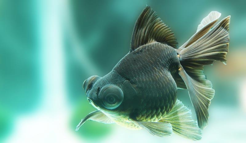 Рыбка с большими глазами