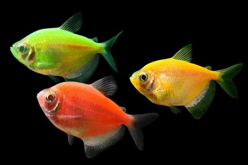 Рыбки яркой расцветки