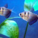 Небольшие рыбки в воде