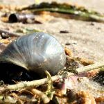 В песке прудовик