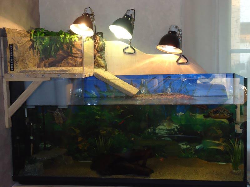 Вариант акватеррариума