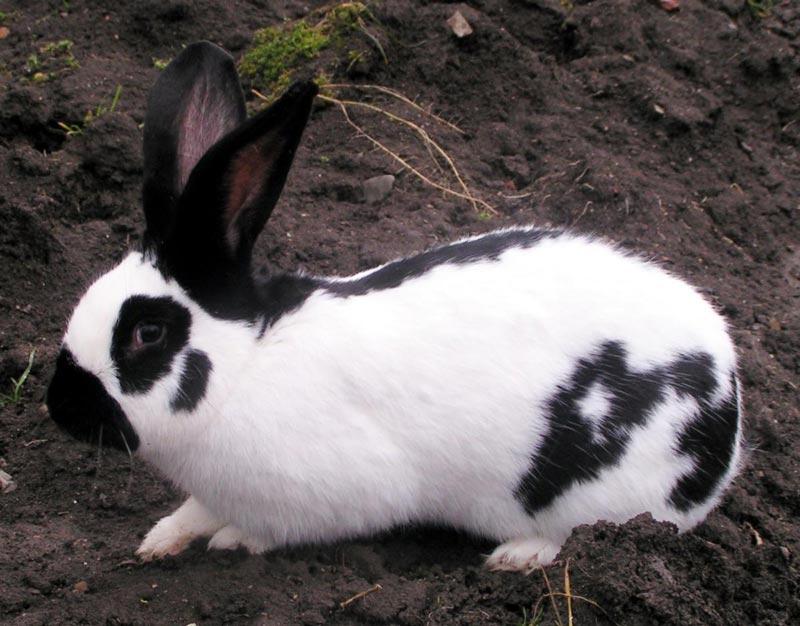 Пятна на теле у кроля
