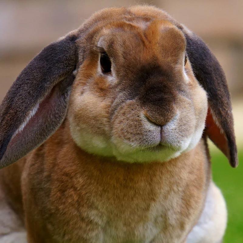 Вельветовый кроль