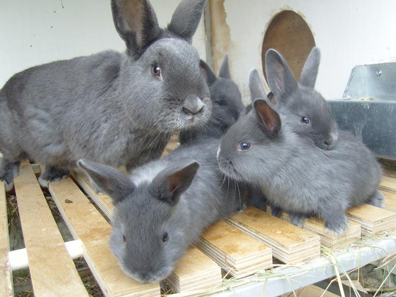 Крольчиха и детки