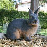 Очень красивый кроль