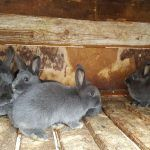 Кролики живут в клетке