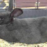Кролик на дне клетки