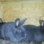 Крольчатки в клетке