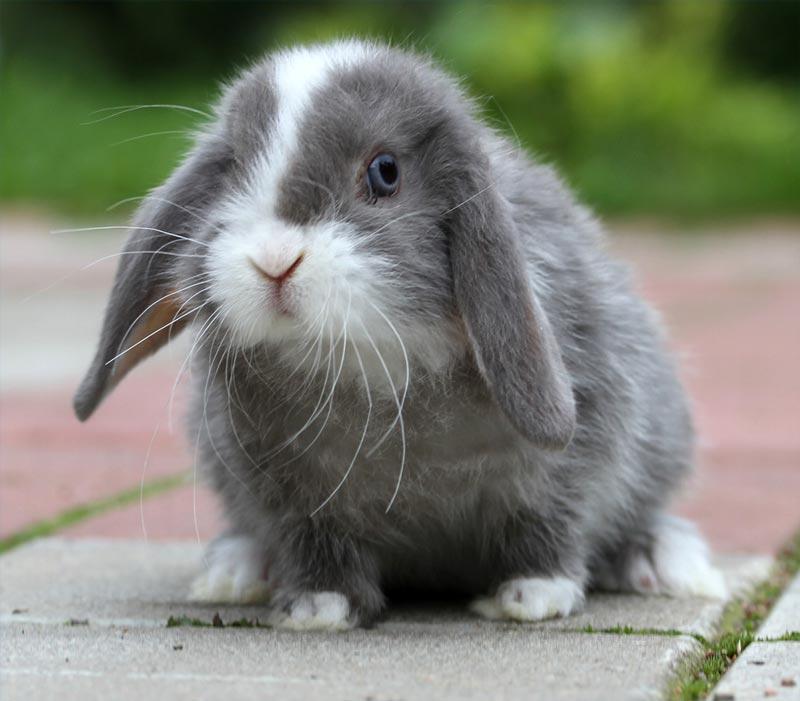 зависит кролик баранчик фото всегда хорошем настроенье