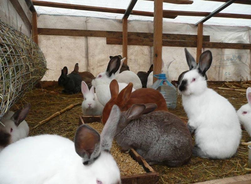 Разные породы кроликов в яме
