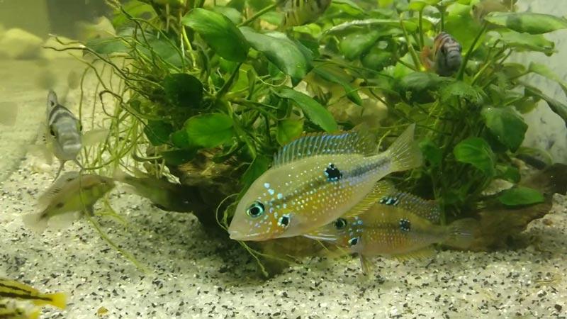 Полупрозрачная рыбка