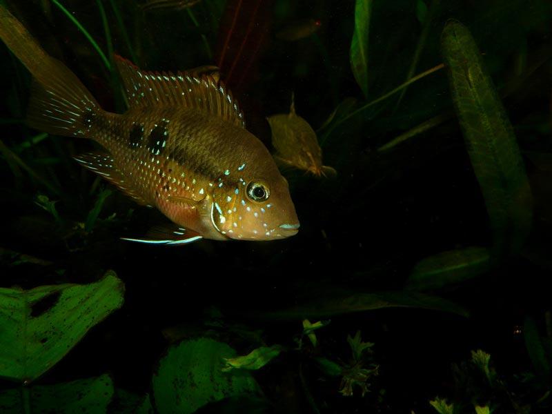 Рыбка в темноте