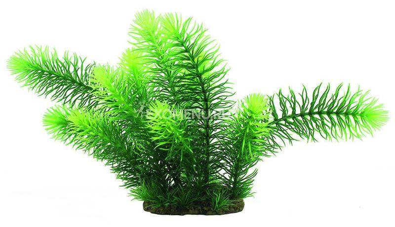 Зеленый Эректус