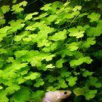 Растение в воде
